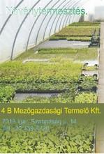 4 B Mezőgazdasági Termelő és Szolgáltató Kft.